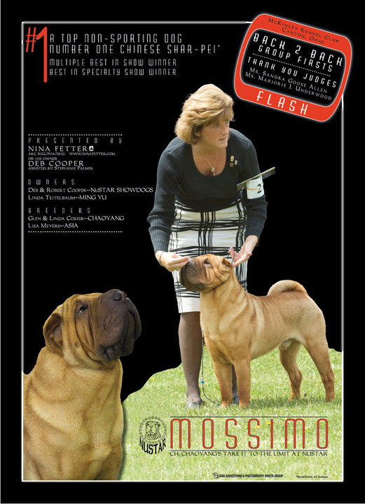 Nina Fetter - AKC Registered Professional All Breed Handler